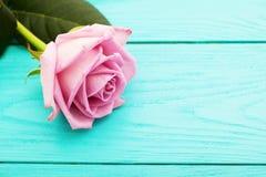 在蓝色木背景的桃红色玫瑰 红色上升了 顶视图和拷贝空间 选择聚焦 嘲笑 免版税库存照片