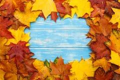 在蓝色木背景的槭树叶子 秋天概念查出的白色 免版税库存图片