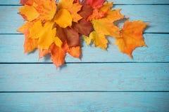 在蓝色木背景的槭树叶子 免版税库存照片