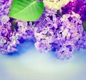 在蓝色木背景的淡紫色花 免版税库存图片
