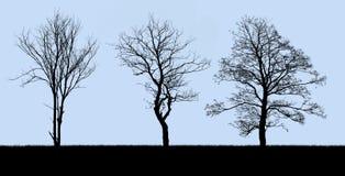 在蓝色查出的结构树剪影 库存图片