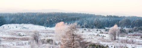 在蓝色森林晴朗的冬天早晨背景的结霜的树  库存图片