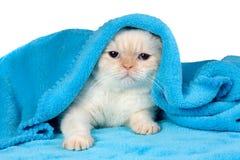 在蓝色毯子下的逗人喜爱的小的小猫 免版税库存照片