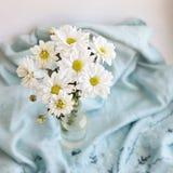 在蓝色毯子背景的白花菊花  免版税库存图片