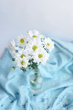 在蓝色毯子背景的白花菊花  图库摄影