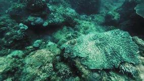 在蓝色海下的美丽的珊瑚礁 股票视频