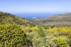 在蓝色海的看法从在pelopo的开花的美丽的玛尼小山 免版税库存照片