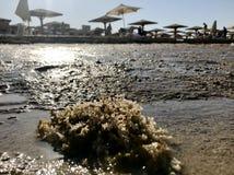 在蓝色海的美好的海景与黄沙的露天的 库存图片