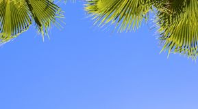 在蓝色清楚的天空背景的绿色棕榈叶 隔绝枣椰子的叶子横幅的,广告,名片 库存照片