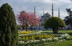 在蓝色清真寺前面的公园在春天 库存图片