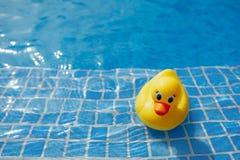 在蓝色游泳池的黄色橡胶鸭子 库存照片
