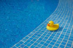 在蓝色游泳池的黄色橡胶鸭子 免版税库存照片