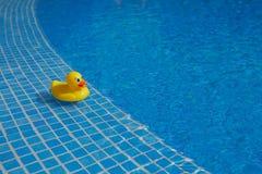 在蓝色游泳池的黄色橡胶鸭子 库存图片