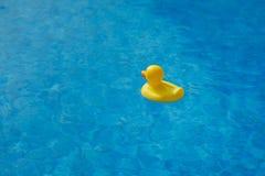 在蓝色游泳池的黄色橡胶鸭子 图库摄影