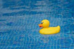 在蓝色游泳池的黄色橡胶鸭子 免版税库存图片