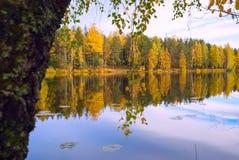 在蓝色湖反映的树 秋天横向 免版税库存照片