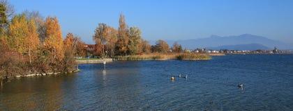 在蓝色湖Obersee,瑞士岸的五颜六色的树  图库摄影