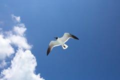 在蓝色的一只海鸥天空背景 库存图片