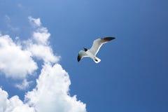 在蓝色的一只海鸥天空背景 库存照片