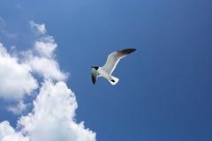 在蓝色的一只海鸥天空背景 免版税库存照片