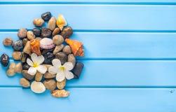 在蓝色的木地板上的石壳 库存照片