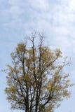 在蓝色的树 库存照片