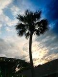 在蓝色的棕榈 库存照片