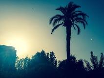在蓝色的棕榈 免版税图库摄影