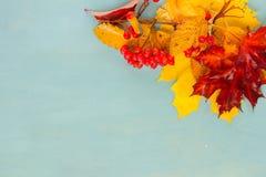 在蓝色的秋天叶子 免版税库存照片