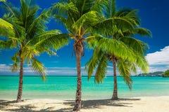 在蓝色盐水湖的三棵棕榈树在斐济 免版税库存照片