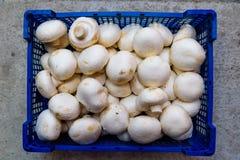 在蓝色盘子的新鲜的未加工的白色蘑菇 库存图片