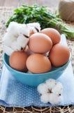 在蓝色碗和棉花花的鸡蛋 库存照片