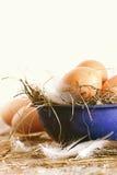 在蓝色碗的农厂鸡蛋有秸杆的 库存图片