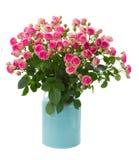 在蓝色罐的束新鲜的桃红色玫瑰 免版税库存照片
