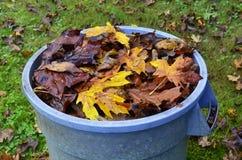 在蓝色罐头的充满活力的秋叶 免版税库存照片