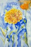 在蓝色背景的万寿菊 免版税库存图片