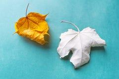 在蓝色背景的两片干燥叶子 免版税图库摄影