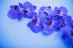在蓝色背景的兰花 库存图片