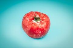 在蓝色背景的冷冻蕃茄 库存照片