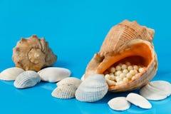 在蓝色背景的几个贝壳 免版税库存照片