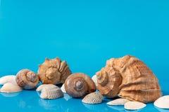 在蓝色背景的几个贝壳 免版税库存图片