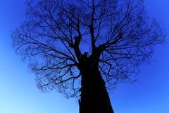 在蓝色背景的剪影树 图库摄影