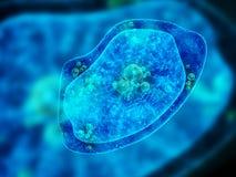 在蓝色背景的变形虫细胞 皇族释放例证