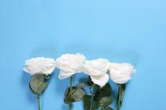 在蓝色背景的四朵白玫瑰与笔记的空的空间 看板卡例证浪漫向量 库存图片