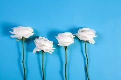 在蓝色背景的四朵白玫瑰与笔记的空的空间 看板卡例证浪漫向量 免版税库存照片