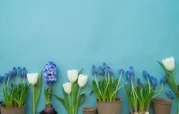 在蓝色背景的复活节装饰构成 白色兔子、郁金香、花盆、没有漆的鸡蛋和树 免版税图库摄影