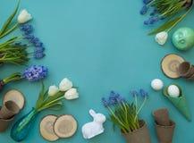 在蓝色背景的复活节装饰构成 白色郁金香、花盆、没有漆的鸡蛋和树 图库摄影