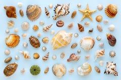 在蓝色背景的异乎寻常的海壳的构成和海星 平的位置,顶视图 免版税库存照片