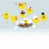 在蓝色背景的新出生的小鸡 免版税库存图片