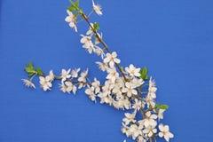 在蓝色背景的春天花 免版税库存图片